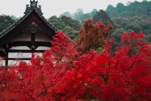 Eikando Zenrin-ji Tempio Autunno Kyoto