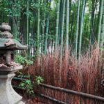 Shoren-in Bamboo Forest